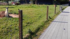 Knotengitterzaun mit Holzpfosten-BIAUS-HSB-MM-090016800000-110926-01