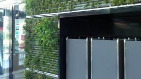 Vegetationswand (Abnahme ms_mm)-BIAUS-HSB-MM-120004000001-120712-02