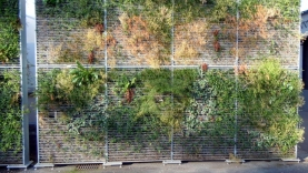 Vegetationswand-BIAUS-HSB-MK-100018200000-100101-04