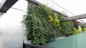 Vegetationswand-BIAUS-HSB-MM-130020000000-140723-06
