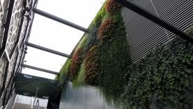 Vegetationswand-BIAUS-HSB-MM-130020000000-140723-08