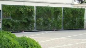 Vegetationswand freistehend-BIAUS-HSB-MM-100018200000-140930-03