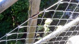 Diagonalgeflecht an Geländer montiert-BIAUS-HSB-MM-130008600000-130607-04
