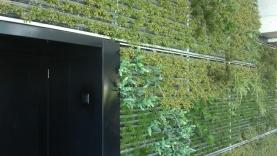 Vegetationswand (Abnahme ms_mm)-BIAUS-HSB-MM-120004000001-120712-03