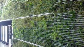 Vegetationswand (Abnahme ms_mm)-BIAUS-HSB-MM-120004000001-120712-04