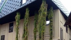 Vegetationswand-BIAUS-HSB-MK-090013800000-090101-04